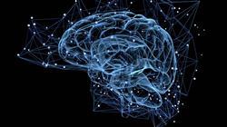 posgrado neuroliderazgo