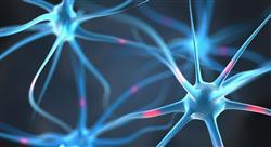diplomado neuropsicología para docentes