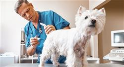 formacion innovación en centros veterinarios