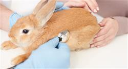 diplomado marketing en centros veterinarios