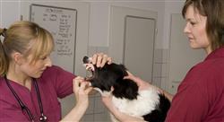 curso recursos humanos en centros veterinarios