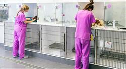 posgrado recursos humanos en centros veterinarios
