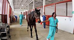 especializacion anestesia general en especies mayores