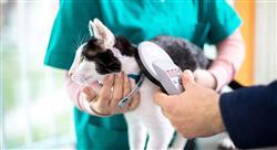 curso aspectos legales y administración en los centros veterinarios