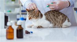 posgrado aspectos legales y administración en los centros veterinarios