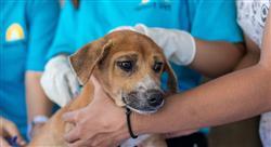 diplomado liderazgo y habilidades directivas aplicadas en los centros veterinarios