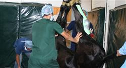 posgrado periodo pre anestésico en especies mayores
