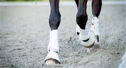 curso lesiones deportivas y manejo en el caballo