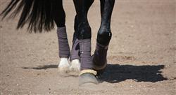 diplomado lesiones deportivas y manejo en el caballo