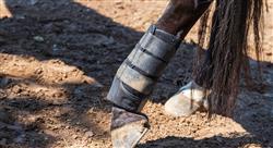 formacion lesiones deportivas y manejo en el caballo