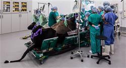 posgrado procedimientos diagnósticos complementarios en especies mayores