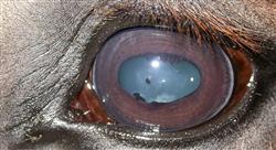 diplomado intoxicaciones patologías oftálmicas y parasitosis en équidos medicina de burros hospitalización y medicina en pacientes geriátricos