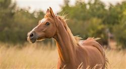 curso patologías de piel en el equino
