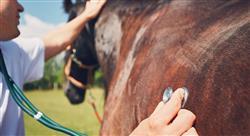posgrado patologías de piel en el equino