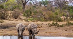 especializacion online conservación de la biodiversidad