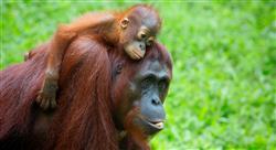 estudiar censos y seguimiento de fauna