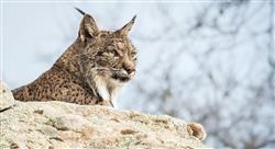 curso online inventarios fauna Tech Universidad