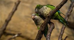 curso gestión de especies exóticas invasoras
