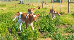 maestria online bienestar animal
