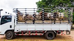 posgrado bienestar animal