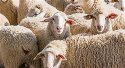 estudiar bienestar animal en el sacrificio