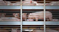 experto universitario bienestar animal en el sacrificio