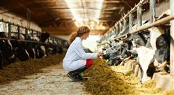 especializacion online bienestar animal en avicultura bovino y porcinocultura