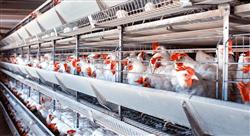estudiar bienestar animal en avicultura bovino y porcinocultura