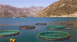 estudiar bienestar animal en piscicultura