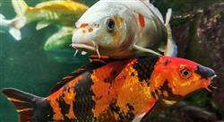 estudiar bienestar animal piscicultura Tech Universidad