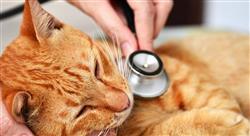 diplomado endoscopia del aparato urogenital en pequeños animales