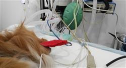 diplomado laparoscópicas del aparato reproductor endocrinas esplénicas y de shunt portosistémico en pequeños animales