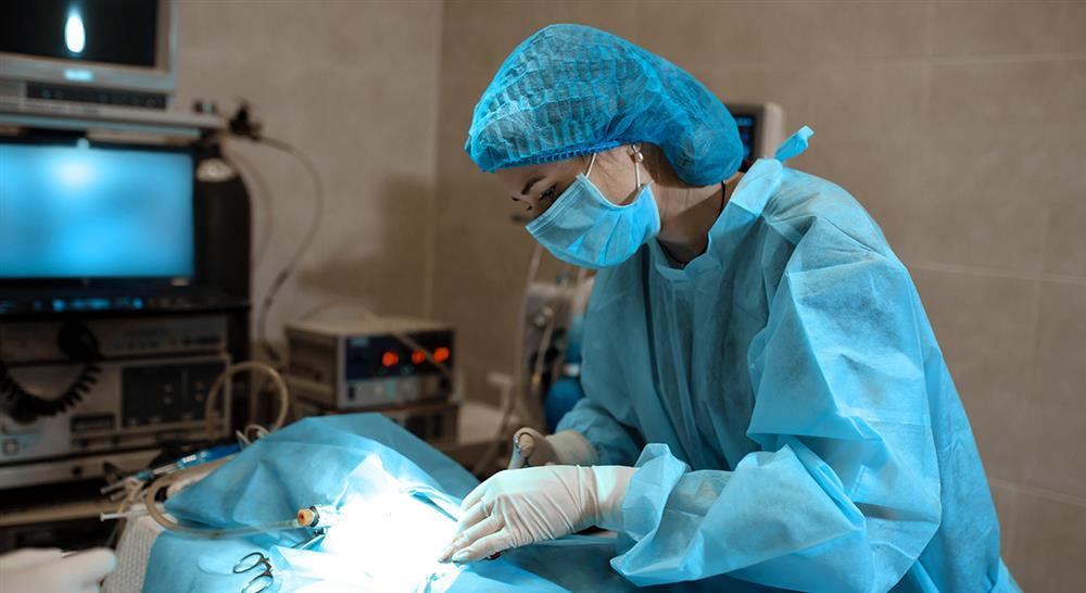 diplomado técnicas laparoscópicas del árbol biliar extrahepático hernias y toracoscopia en pequeños animales