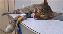 curso online enfermedades viricas caninas felinas Tech Universidad