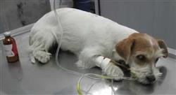 estudiar enfermedades viricas caninas felinas Tech Universidad