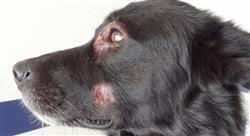 formacion enfermedades viricas caninas felinas Tech Universidad