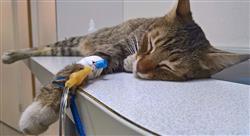 curso enfermedades viricas felinas Tech Universidad