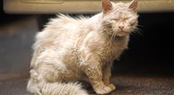 curso online enfermedades viricas felinas Tech Universidad