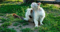 curso enfermedades parasitarias vectoriales felinas Tech Universidad