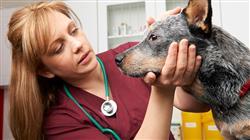 posgrado experto diagnostico radiologico ortopedico neurologico pequenos animales
