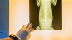 curso curso online patologias medula espinal pequenos animales