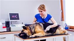 especializacion online patologias digestivas genitourinarias endocrinas pequenos animales