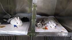 especializacion patologias digestivas genitourinarias endocrinas pequenos animales