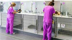 experto universitario patologias digestivas genitourinarias endocrinas pequenos animales