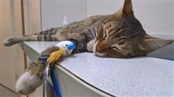 maestria medicina interna pequenos animales