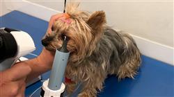 magister medicina interna pequenos animales