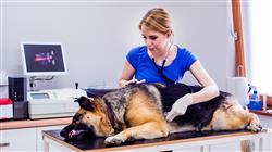 posgrado alteraciones sistema endocrino pequenos animales