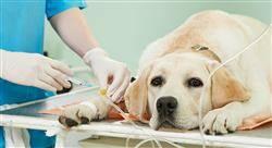 maestria online peritaje judicial veterinario