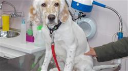 curso acreditacion capacitacion practica dermatologia pequenos animales