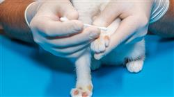 curso online capacitacion practica dermatologia pequenos animales